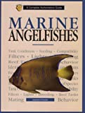 Marine Angelfishes