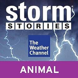 Storm Stories