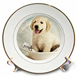 3dRose cp_172989_1 Cute Golden Retriever Puppy Spa Day Art Photo Courtesy Badestboss-Porcelain Plate, 8-Inch