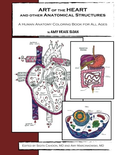 Art Of The Heart And Other Anatomical Structures A Human Anatomy