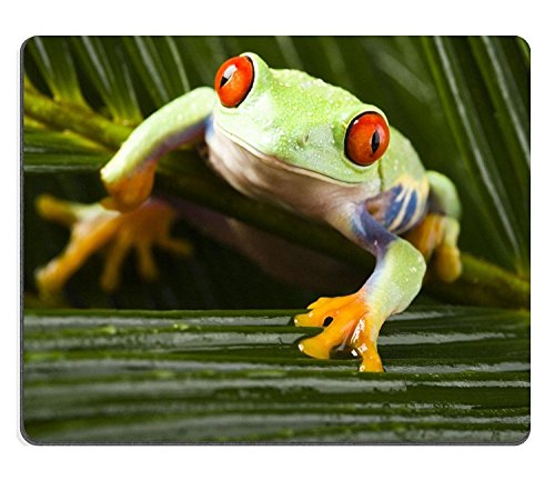 Natural Rubber Gaming Mouse padmouse mat Red Eyed Leaf Frog PM011874