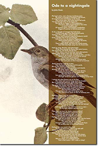 Introspective Chameleon John Keats Poem Print - Ode to a Nightingale - Art Photo Poster Gift - Size: 24 x 16 Inches (61 x 40.5 cm)