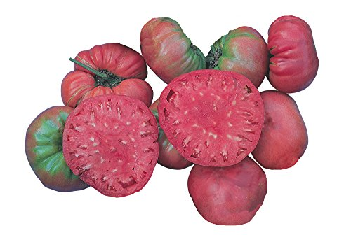 Burpee Giant Pink Belgium Tomato Seeds 30 seeds (Tomato Giant)