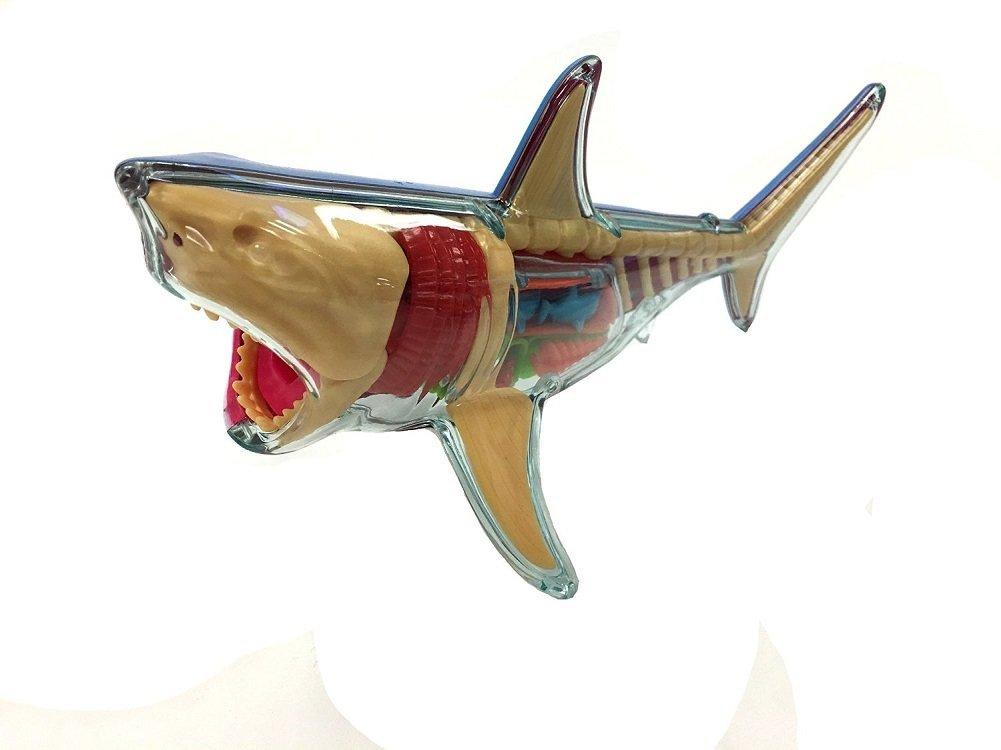 Amazon X Ray Fun Great White Shark Sports Outdoors