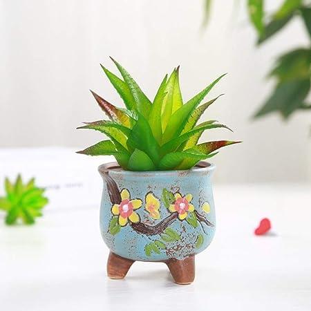 LEIXNDPLBO Macetas de Flores carnosas de Corea Jardinería ...