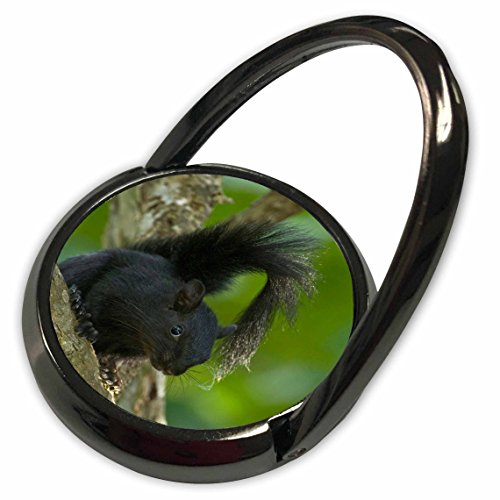 3dRose Danita Delimont - Squirrels - Mexico, Tamaulipas State, red-bellied squirrel - SA13 BJA0117 - Jaynes Gallery - Phone Ring (Bellied Squirrel)
