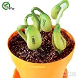 Hot Sale! Bonsai Plant Magic Bean Seed Gift Plant Growing Message Word Love Office Home Very Easy to Grow 5pcs Seeds of Hope