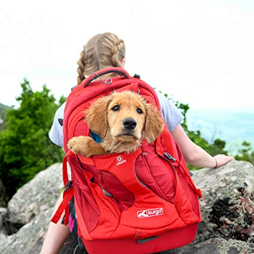 Kurgo Dog Carrier Backpack for Small Dogs & Cats | G-Train Pet Backpack Carrier | Airline Approved | Cat Backpack | Small Dog Backpack for Hiking & Travel | Lightweight | Waterproof Bottom (Red)