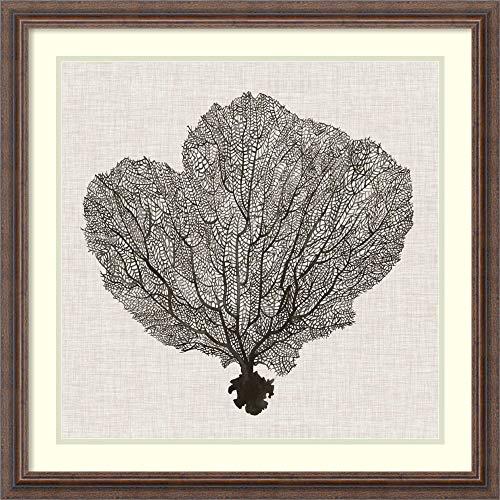 Art Fan Shadow - Framed Art Print 'Shadow Sea Fan I' by Grace Popp