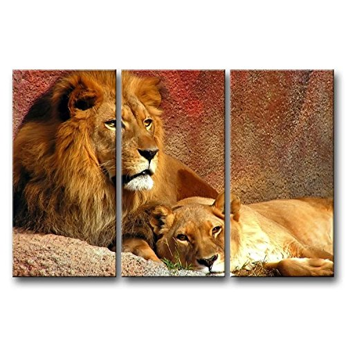 Animal Paintings Wall Art Relaxing Lions 3 panel Picture
