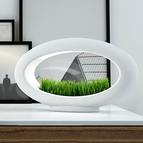 Designer Lamp - Valsfer Grasslamp - European Style Centerpiece - Ideal for Minimalists - Suitable for Decorating Your Bedroom Dining Table Hotel Office (Wheatgrass not Included)