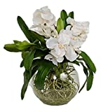 The French Bee Watergarden Collection 3 Silk Vanda Orchids in a Glass Bowl, White