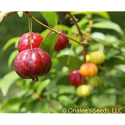 Surinam Cherry (Eugenia uniflora) AKA: Florida Cherry, Brazil or Brazilian cherry, Cayenne cherry, pitanga (10+ Seeds) : Garden & Outdoor