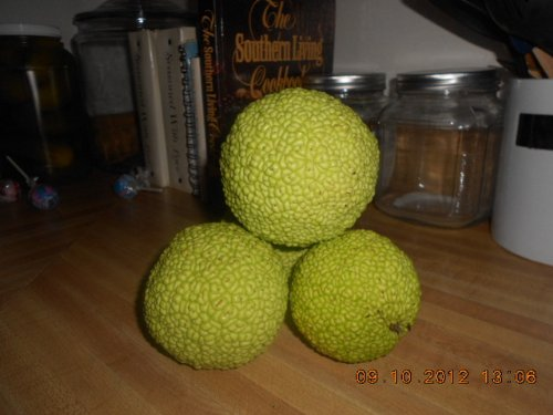 Unknown Ball - 6