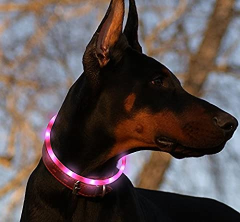 LED Dog Collar, USB Rechargeable Waterproof Safety Pet Dog Collar Light One Size Fits All (purple) - Lighted Cat Collars