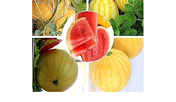 10g // Pack Original Pack Yellow Red Jingxin No 1 Watermelon Seeds Very Sweet 12/% Sugar Rare Melon Seeds E3004
