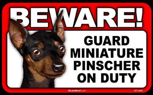 Pinscher Miniature (BEWARE Guard Dog on Duty Sign - Miniature Pinscher)