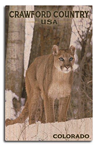 Lantern Press Crawford Country USA, Colorado - Cougar in Snow (10x15 Wood Wall Sign, Wall Decor Ready to Hang)