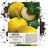 buy Seed Needs, Golden Beauty Casaba Melon (Cucumis melo) 100 Seeds Non-GMO now, new 2020-2019 bestseller, review and Photo, best price $3.85