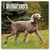Weimaraners 2018 12 x 12 Inch Monthly Square Wall Calendar, Animals Dog Breeds