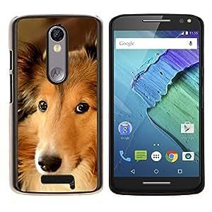 Collie perro pastor de Shetland Perro de Canaan- Metal de aluminio y de plástico duro Caja del teléfono - Negro - Motorola Droid Turbo 2 / Moto X Force