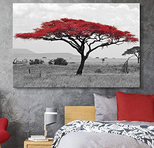 Black and White African Savanna Background with Red Partial Color Acacia Tree Top