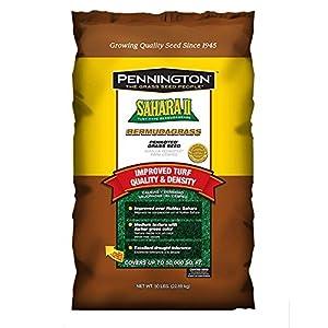 Pennington Sahara II Bermuda Grass Seed