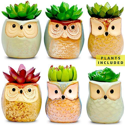 Amaze Owl Set of 6 Artificial Succulent Plants and Ceramic Planters, Fake Succulents Office Plant Pots, Indoor Decorations, New Home Gift Ideas, Living Room Table Shelf House Desk Decor