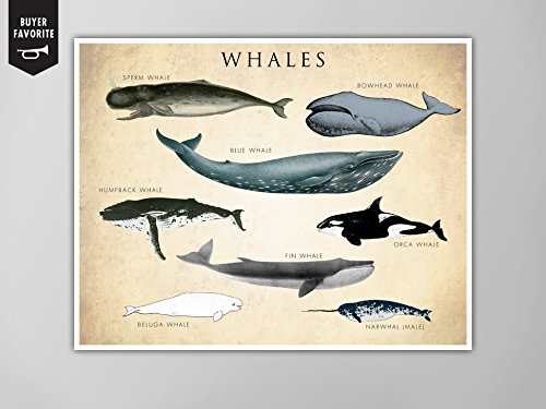 whale chart poster