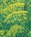 Burpee Bouquet Organic Dill Seeds 900 seeds