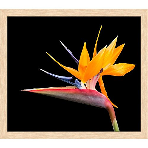 Bird Of Paradise Natural Wood - ArtzFolio Bird of Paradise Flower D3 Canvas Painting Natural Brown Wood Frame 18.2 X 16Inch