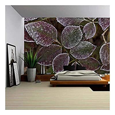 Autumn Leaves with Frost Closeup - Wall Murals