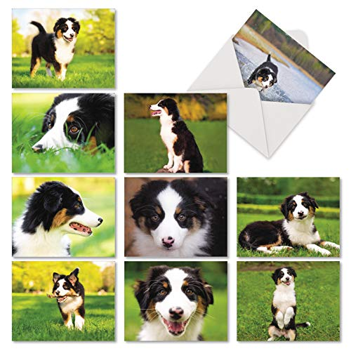10 Awesome Australian Shepherds - Boxed Assortment of Blank Note Cards with Envelopes (Small 4 x 5.12 Inch) - Cute Puppy, Dog Stationery Greeting Cards - Animal Notecard Gift Set AM6830OCB-B1x10 ()