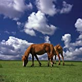 Brewster Phoenix 99454 Pre-Pasted Non-Woven Mural Horses on the Plain, 6-Foot x 6-Foot