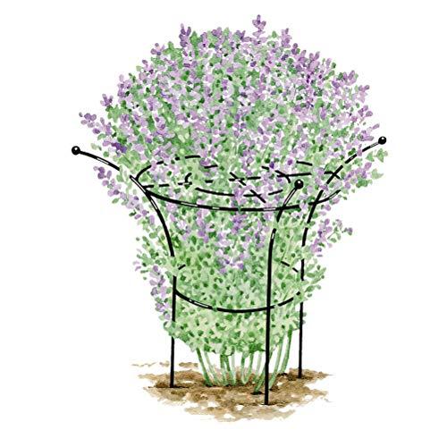 "Mr.Garden Garden Trellis 17.71""x31.49"" Shaped Plant Support Trellis, Heavy Duty Vine Trellis for Climbing Plant Ivy/Rose/Morning Glory/Clematis Flower Trellis"