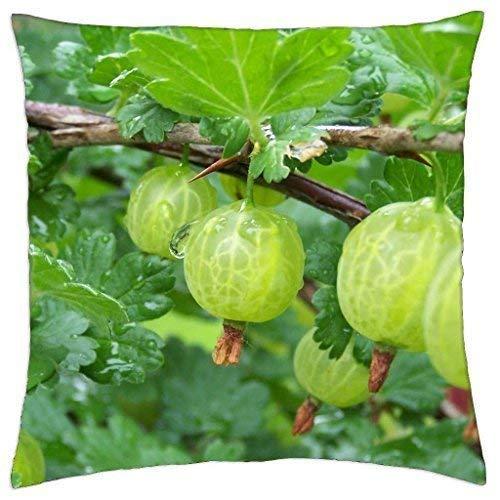 Fun Qiaoya Que ES fruto o!!! - Throw Pillow Cover Case (18