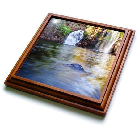 - 3dRose DanielaPhotography - Landscape, Nature - Florence Falls in Litchfield National Park, Northern Territory - 8x8 Trivet with 6x6 ceramic tile (trv_281987_1)