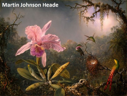 Heade Painting (40 Color Paintings of Martin Johnson Heade - American Landscape Painter - Hudson River School (August 11, 1819 - September 4, 1904))