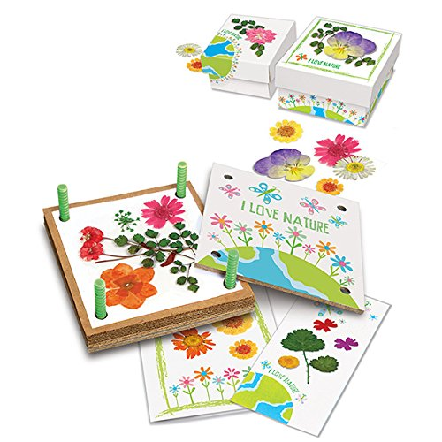 51WMJ2U8KPL - 4M Green Creativity Pressed Flower Art Kit - Arts & Crafts DIY Recycle Floral Press Gift for Kids & Teens, Girls & Boys