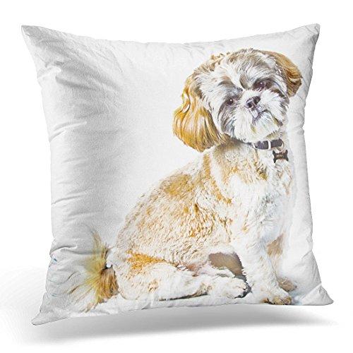 Cover Cute Shitzu Shih Tzu Dog Brown Breed Decorative Pillow Case Home Decor Square 20 x 20 Inch Pillowcase ()