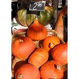 TROPICA - Squash – Red Uchiki Kuri (Cucurbita maxima) - 10 Seeds - Vegetable specialities