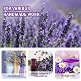 June Fox Fragrant Lavender Buds Dried Lavender