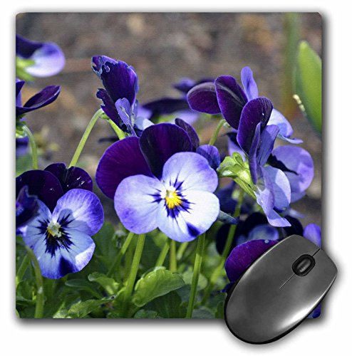 3drose-llc-8-x-8-x-025-inches-mouse-pad-a-batch-of-purple-pansies-mp-51789-1