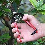 Best Garden Tools Stainless Steel Corona Pruning Shear Garden Pruner Flowers/Grass Shear Handheld Gardening Pointed Blade Grafting Scissors