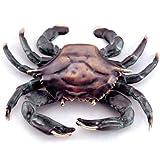 SPI 30748 Crab Doorknocker
