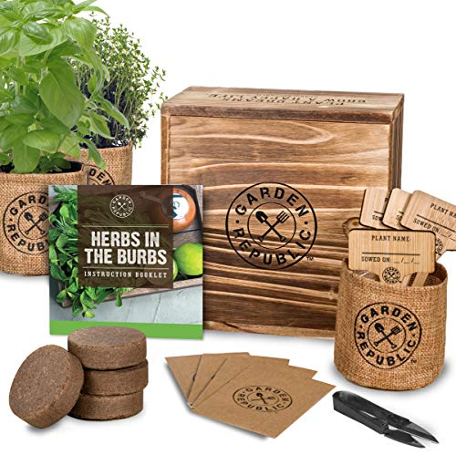 (Indoor Herb Garden Starter Kit - Organic, Non GMO Herb Seeds - Basil Thyme Parsley Cilantro Seed, Potting Soil, Pots, Scissors - DIY Grow Kits for Growing Herbs Indoors, Kitchen, Balcony, Window Sill)