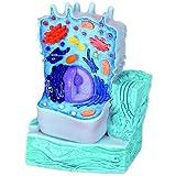 "3B Scientific R04 Animal Cell Model, 8.3"" x 4.3"" x 12.2"""