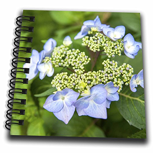 nt - Flowers - USA, Massachusetts, Reading, blue Lacecap Hydrangea - Mini Notepad 4 x 4 inch (db_259442_3) (Blue Hydrangea Sticker)