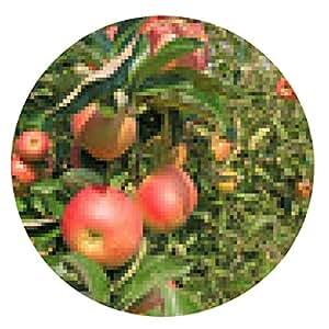 alfombrilla de ratón De recogida de manzanas en el huerto - ronda - 20cm