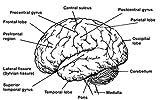 AP® Psychology Crash Course, 2nd Ed., Book